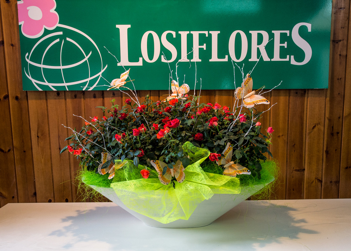 Losiflores