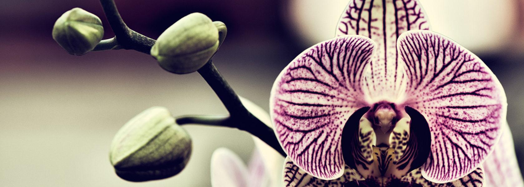 Losi Flores